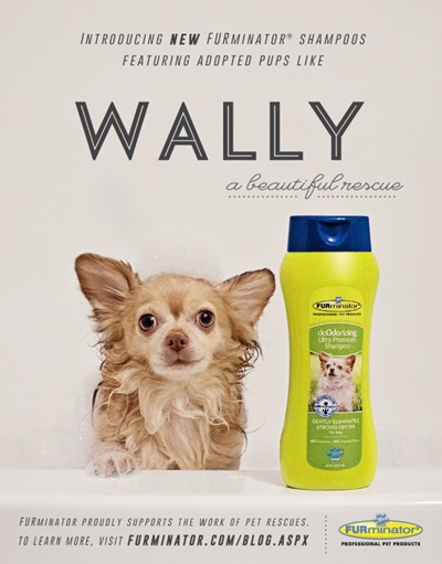 Wally Beautiful Rescue Furminator Poster